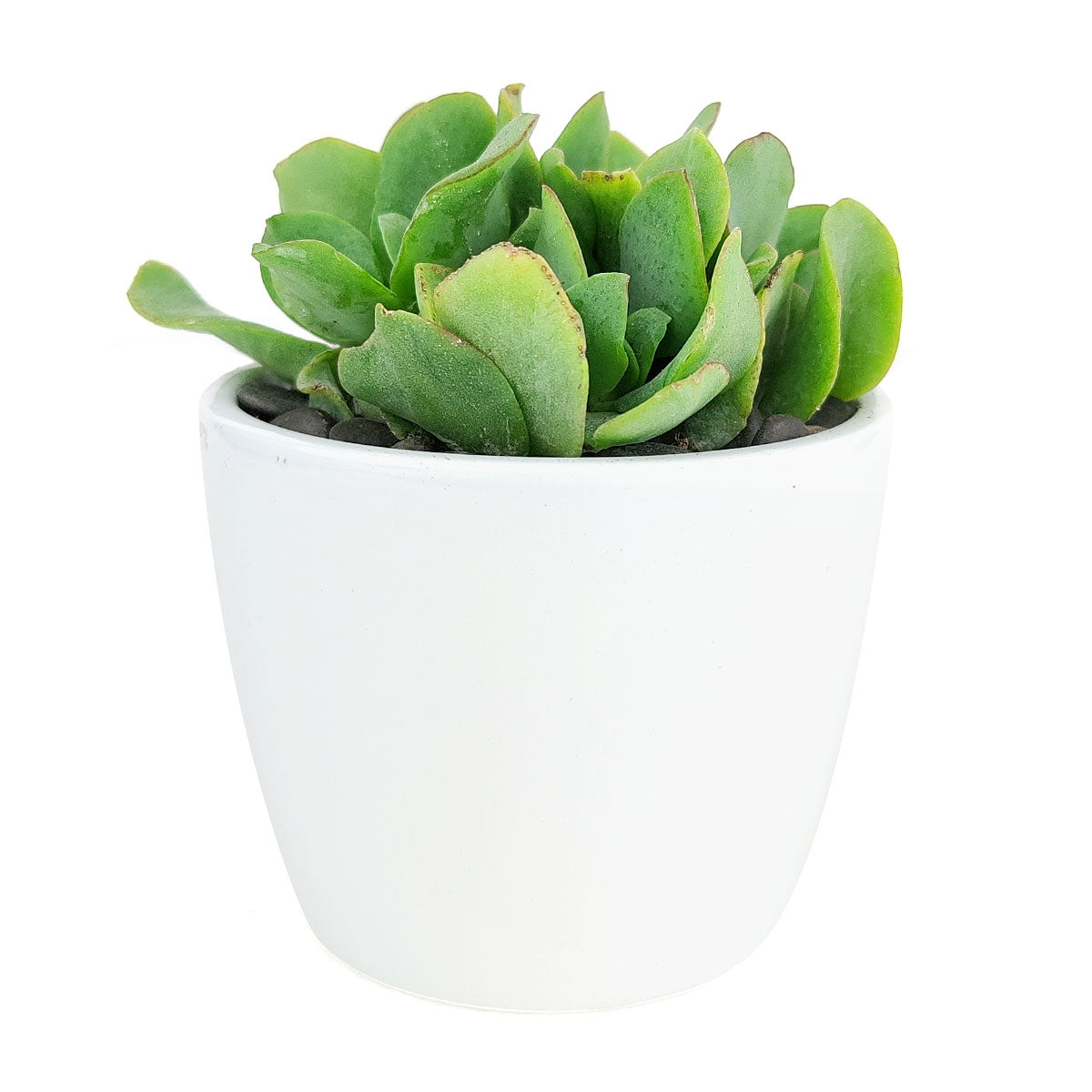 Simple Ceramic Pot for sale, White Cactus Ceramic Pot, Modern Pot Decor for Home or Office, High Quality Ceramic Pot for Plants and Flowers, Modern Style Indoor Ceramic Planter
