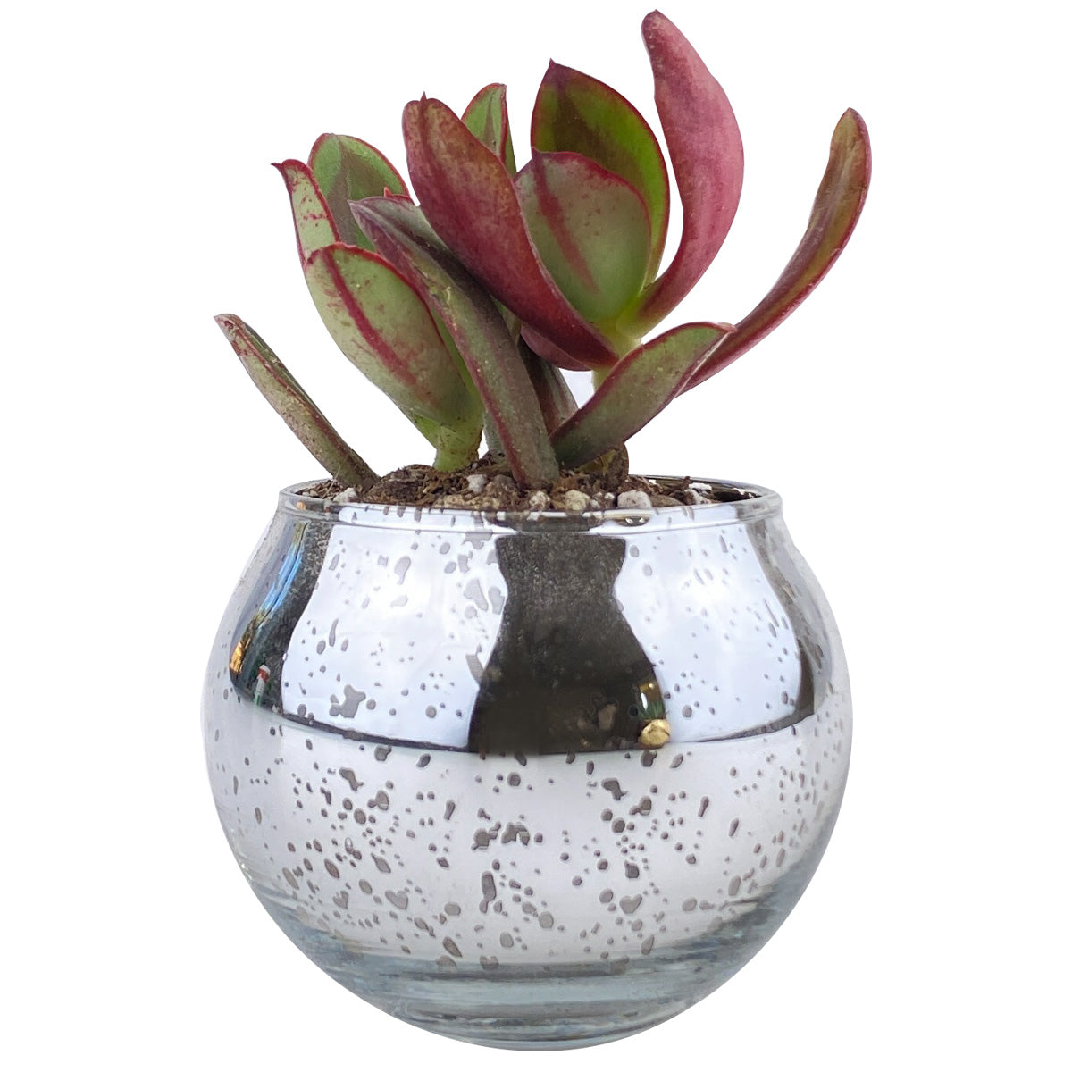 Pot for sale, Mini pot for succulent, Succulent pot decor ideas, Flower pot for sale, glass pots for planting, succulent gift for holiday, Round Silver Glitter Pot