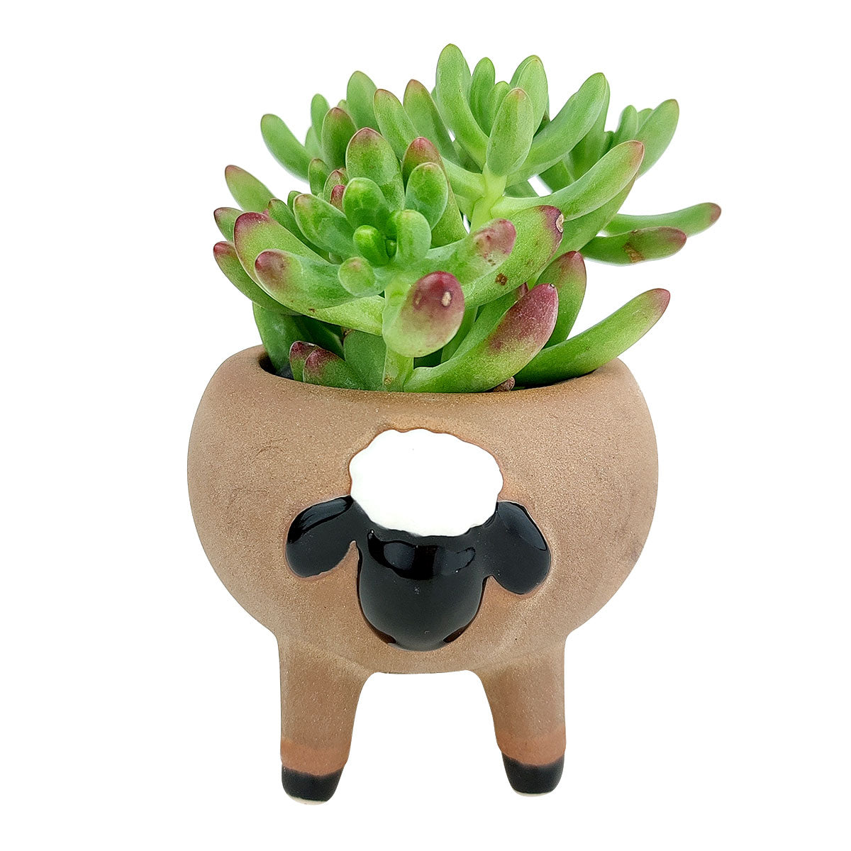 Cute Sheep Animals Ceramic Planter Pots for Succulent and Flowers, Ceramic Pot, Animal Pot, Mini ceramic pot for sale, Succulent pot for sale, Succulent gift decor ideas