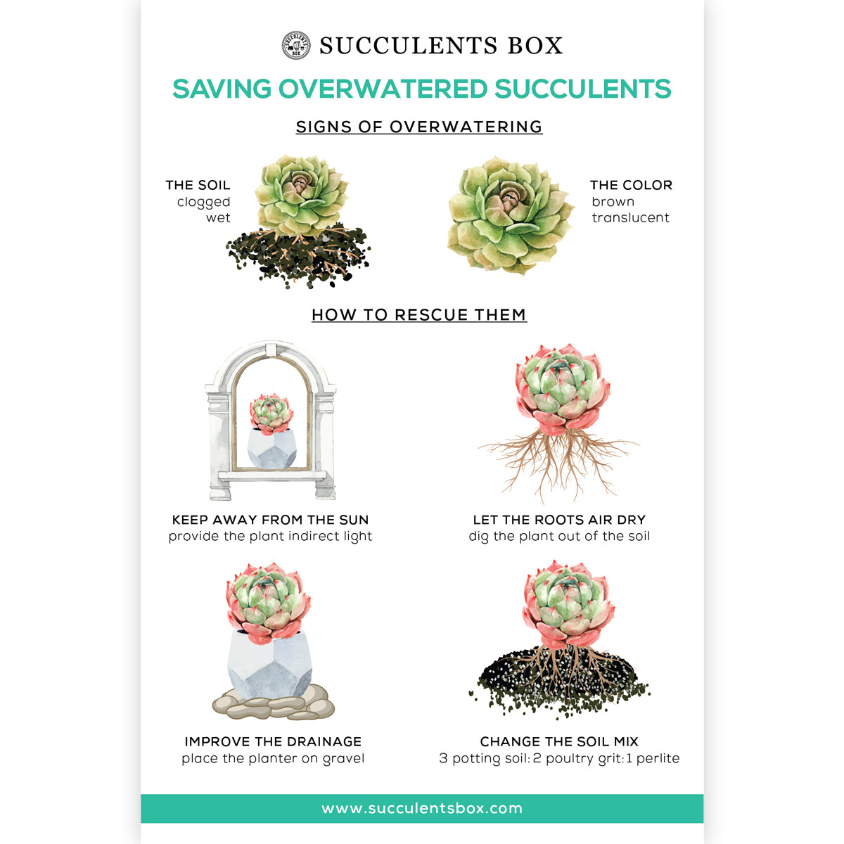 Saving Overwatered Succulents Card for sale, Succulent Care Card for sale, Succulent Gift Ideas