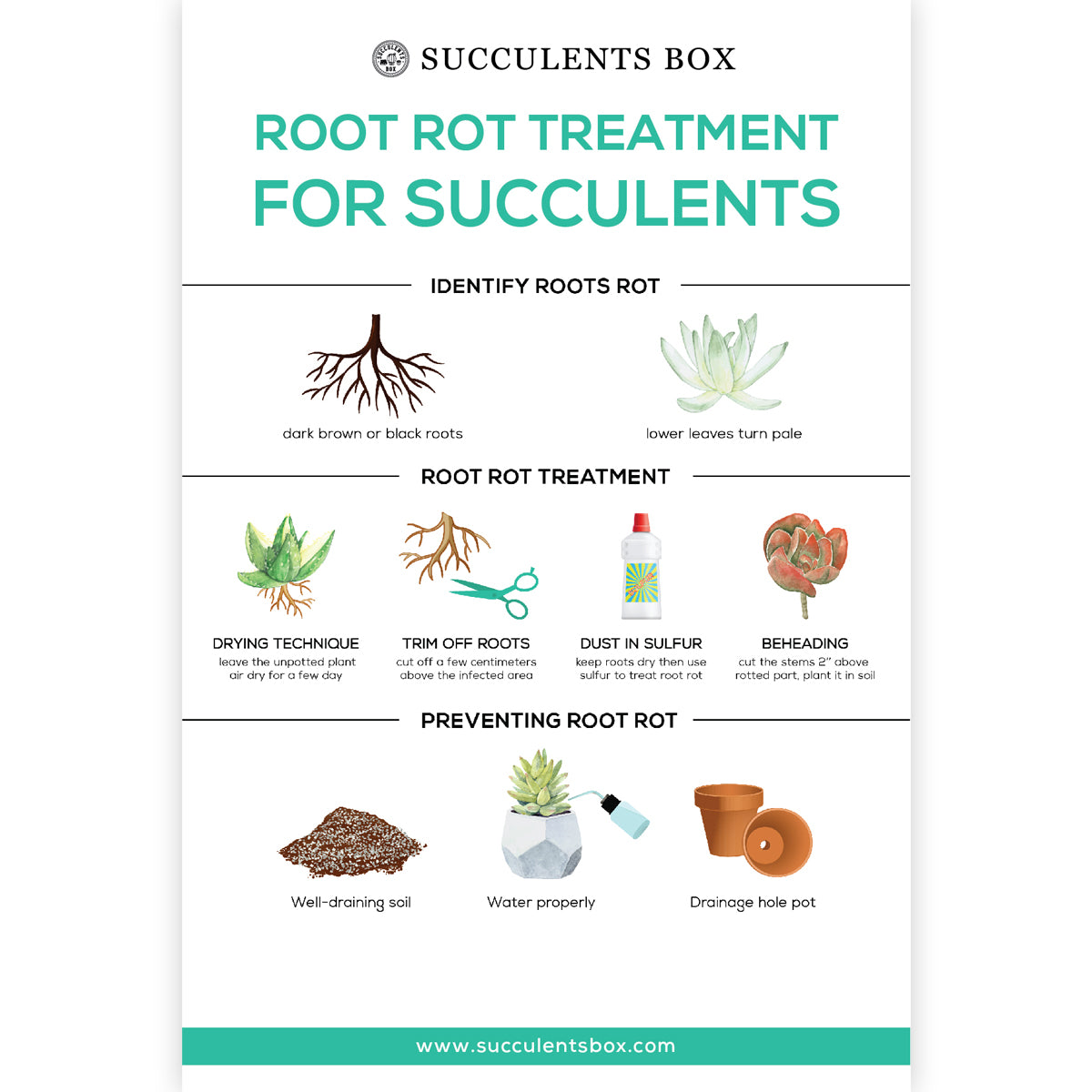 Root Rot Treatment for Succulents care card for sale, Succulent care instruction, Succulent gift ideas, gifts for succulent lovers