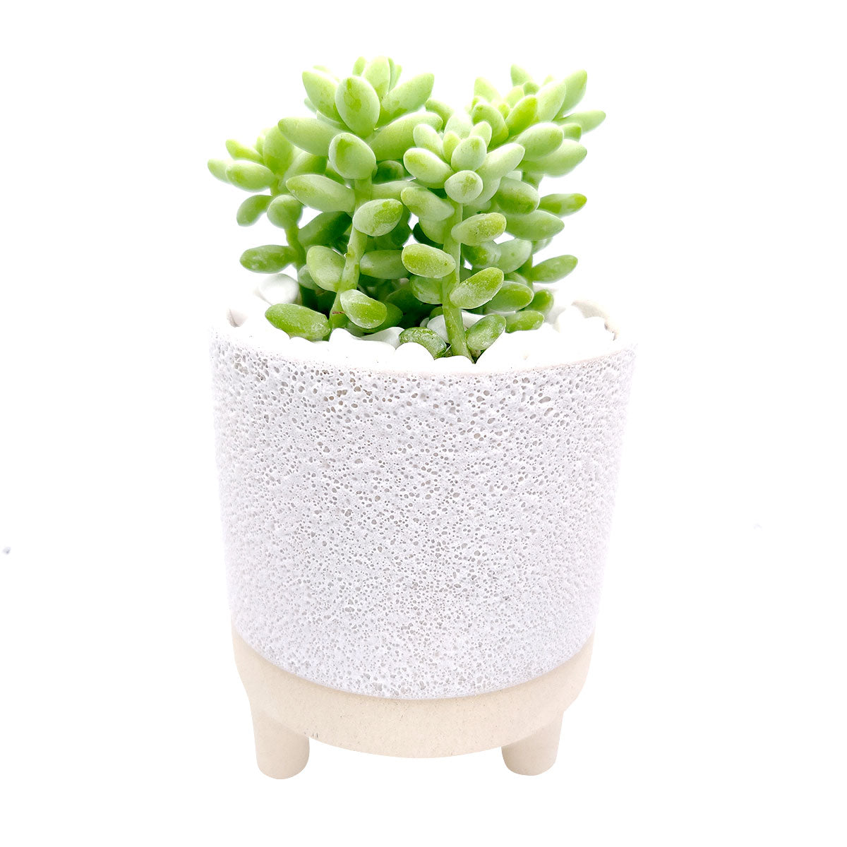 4 inch Bubbled Ceramic Footed Pot for sale, Designed Ceramic pot for succulent and cactus, small flower pot, Succulent pot decor ideas, succulent gift ideas
