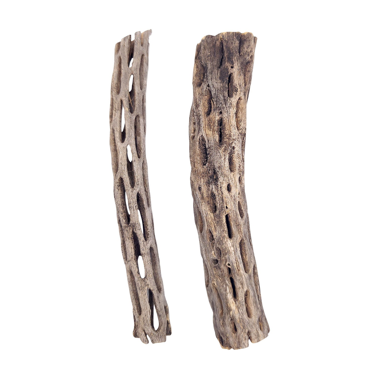 6 inch Staghorn Cholla Wood Pot for sale, Cholla for Aquariums, Crafting, Air Plants, and more, Natural Cholla Cactus Wood for sale, Air Plant display