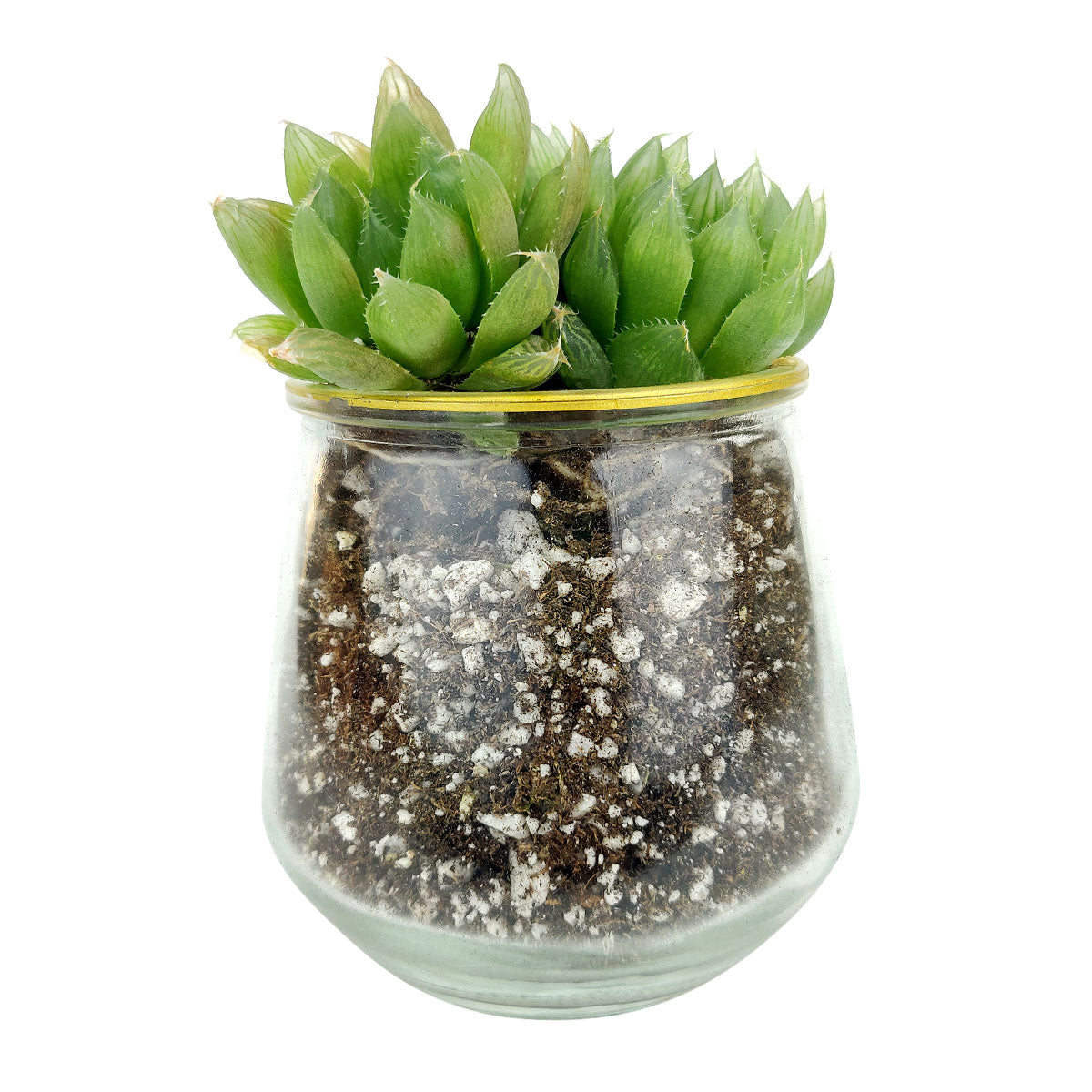 Pot for sale, Mini pot for succulent, Succulent pot decor ideas, Clear Gold Rim Pot, Flower pot for sale, glass pots for planting, succulent gift for holiday