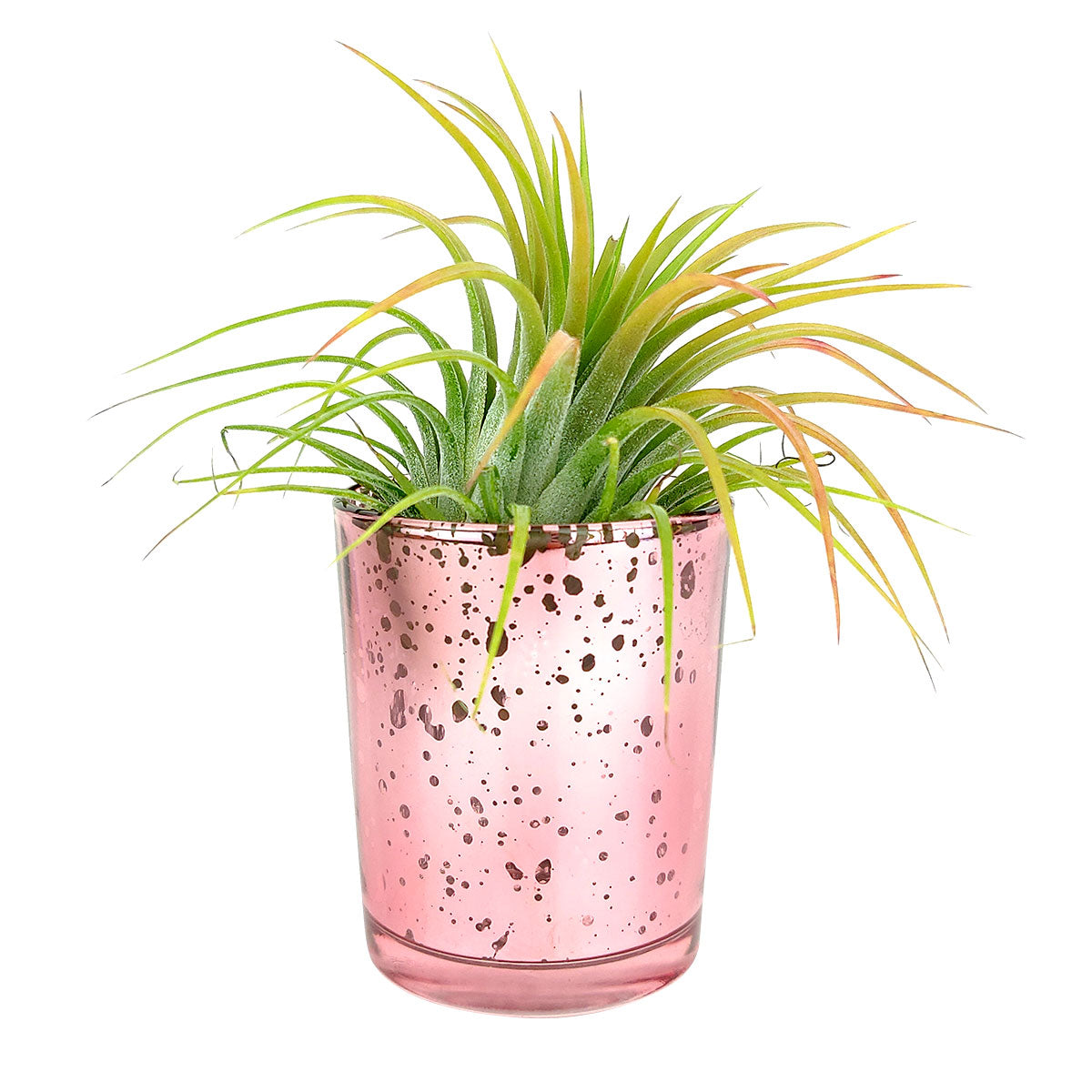Mini Sparkly Pot for Air Plant