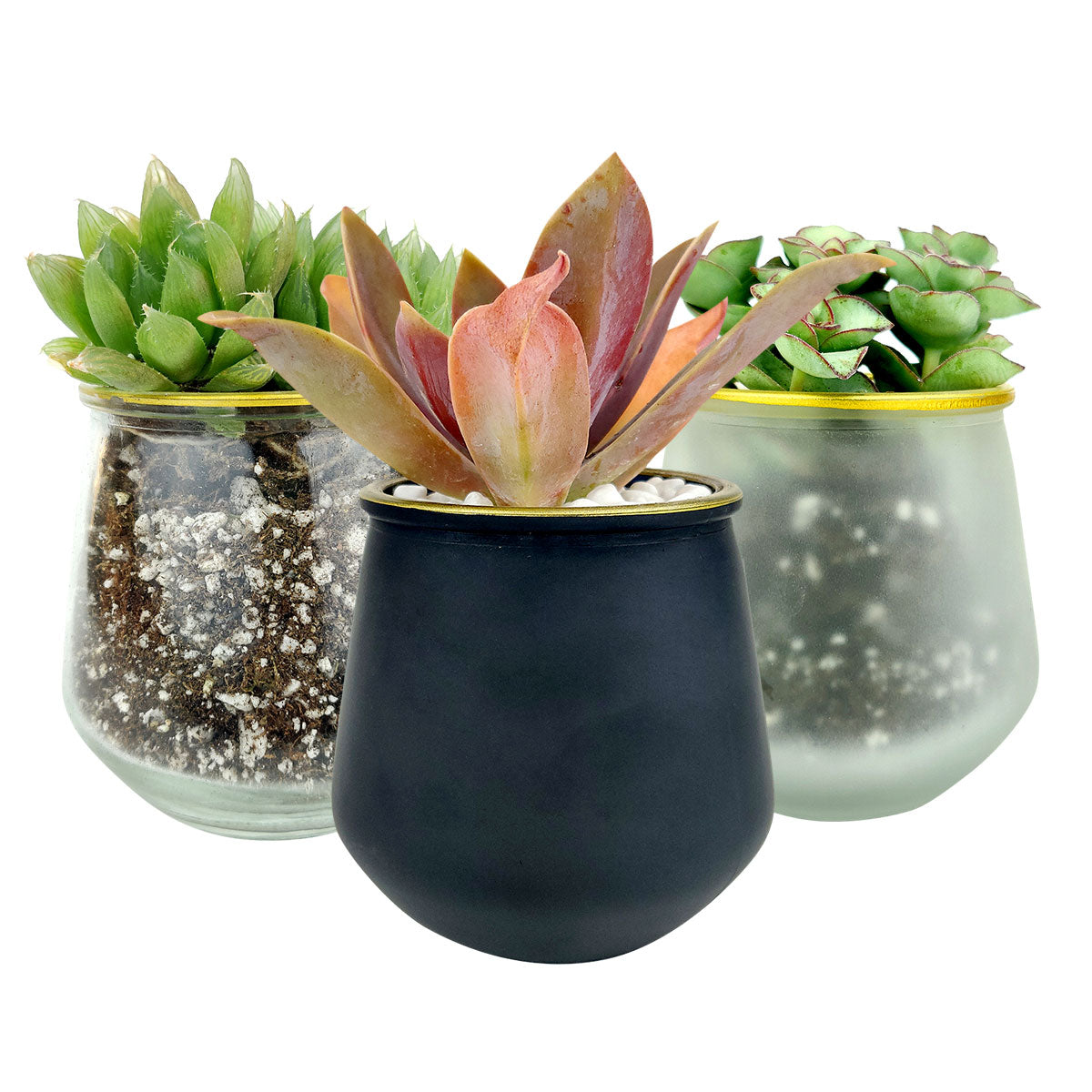 Pot for sale, Mini pot for succulent, Succulent pot decor ideas, 3 Pack Gold Rim Pots, Flower pot for sale, glass pots for planting, succulent gift for holiday
