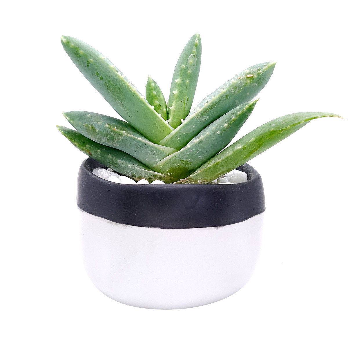 Bi-color Glaze Ceramic Pot for sale, Ceramic pot for succulent and cactus, Plant pot with minimalist style, Modern style home decor ideas, Flower pot for sale, Mini pot for plant