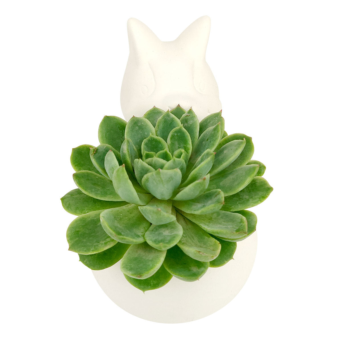 DIY Ceramic Kitty Pot for sale, White Ceramic Cat Planter Pot, Unique Succulent Gift, craft supplies, cat shaped planter pot, succulent pot plant pot DIY pot