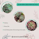 How to care for blue elf Succulent, How to make your succulent pink, How to change succulent color, How to make blue elf Succulent turn pink, Succulent turning pink, How to make succulents change color, How to grow colorful succulents.
