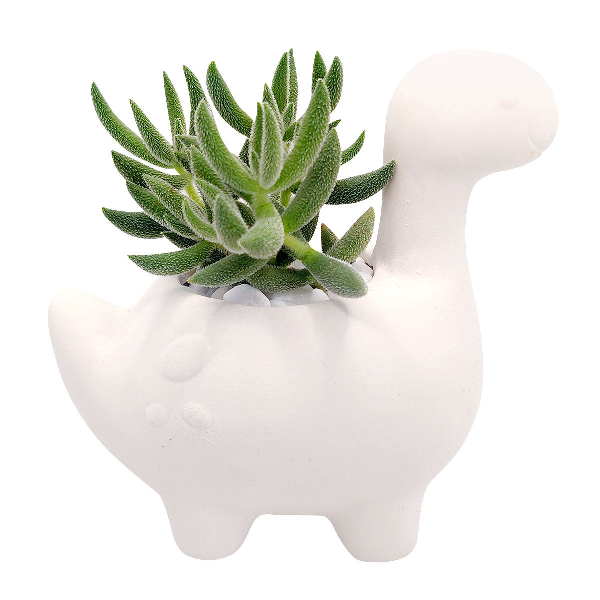 DIY Ceramic Dinosaur Pot for sale, White Ceramic Animals Succulent Planter, Crafts for Kids, Unique Succulent gift ideas, White ceramic succulent pot planter