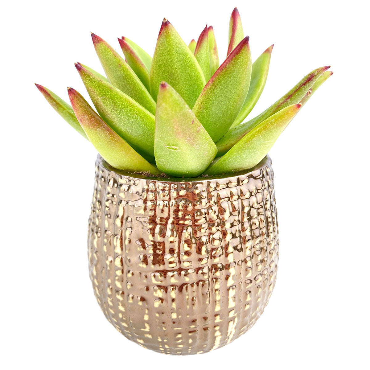 Pot for sale, Mini pot for succulent, Succulent pot decor ideas, Bronze Gold Pot, Flower pot for sale, glass pots for planting, succulent gift for holiday