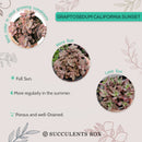 Graptosedum california sunset, succulent subscription, monthly succulents, succulent care, succulent plant, how to grow succulents, Rare succulents, Succulents, succulents store in CA, Graptosedum california sunset in California, How to grow Graptosedum california sunset
