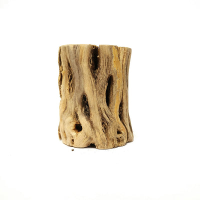 Cholla Wood Design for Air Plants