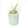 Moderrn Container for Air Plants