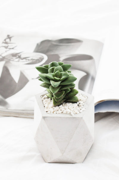 Mini Concrete Pot