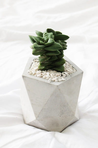 Concrete Pot for sale