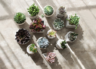 concrete pot for succulents