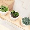 3 Succulents 3 Clay Pots/ month - 12 month subscription  Auto renew