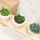 Subscription Box with Care Instruction, Succulent Subscription Box, Succulents for Sale, Types of Succulents, Succulents Shop in California, Succulents and Cactus Plants, Succulent Gift Box Monthly