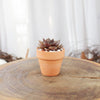1 Succulent 1 Clay Pot/ month - 3 month subscription