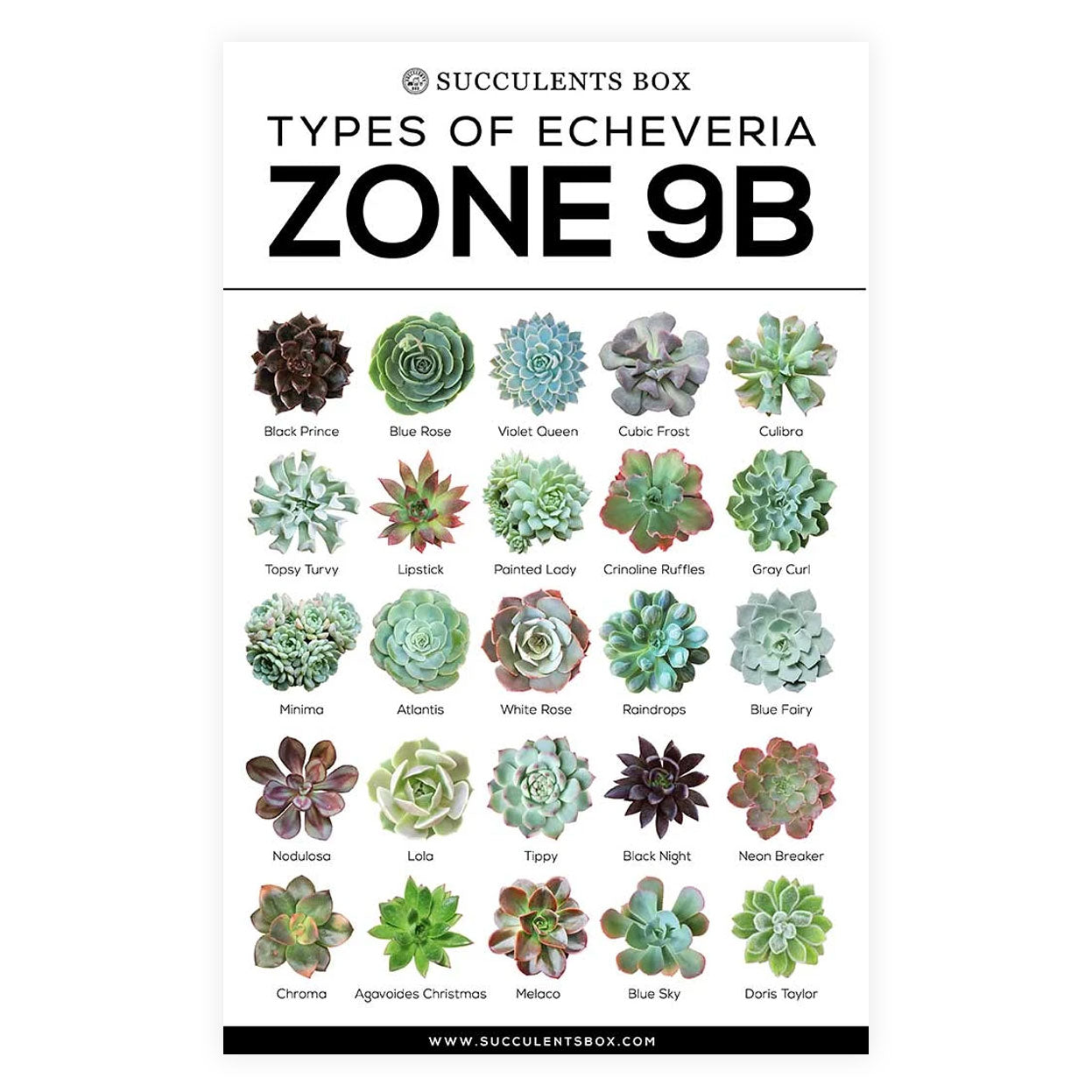 choosing succulent for zone, Succulent designs Zone, Succulents Hardiness Zone, best succulent image, collection of Printable Succulents Art, digital printable succulent, Printable Arts: Types of Succulent Zones for sale, Succulent Printable, succulent printable selection, succulent decor idea, succulent gift, succulent art