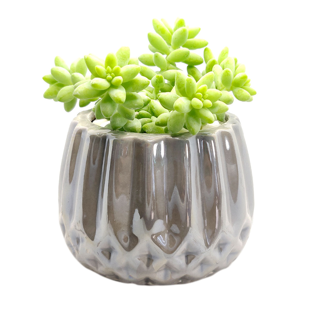 Pot for sale, Mini pot for succulent, Succulent pot decor ideas, Silver Modern Geometric Pot pot, Flower pot for sale, glass pots for planting, succulent gift for holiday