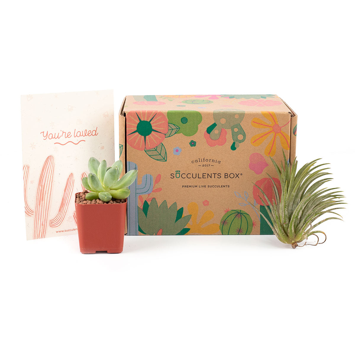 Succulent subscription box delivered monthly, Succulent subscription gift for sale, airplants subscription box monthly