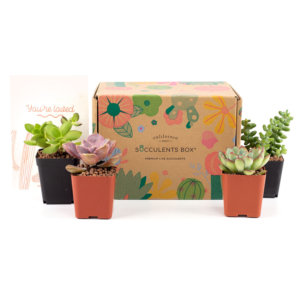 Succulent Subcription Boxes for sale, Succulents for Sale, Types of Succulents, Succulents Shop in California, Succulents and Cactus Plants, Cactus Box, Subscription Box with Care Instruction, Succulent Subscription Gift Box Monthly