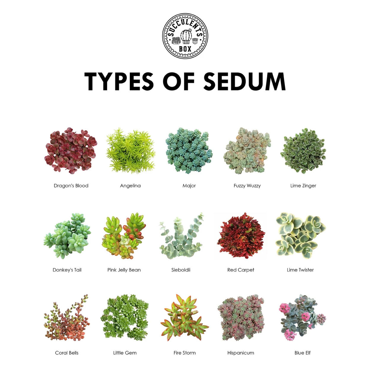 Types of Succulents Printable Art for sale, Printable Cactus Art, Succulents Digital Download, Succulents Home Office Decor, Succulents Gift Ideas, Modern Wall Art Decor, Succulents Printable Poster, printable art cacti download home decor, Types of Sedum Succulents for sale