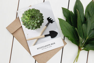 Succulents Card Favor