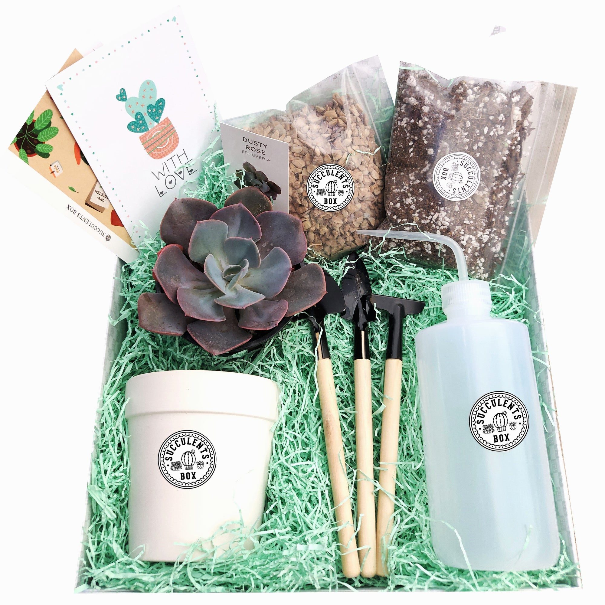 Beginner Kit Gift Box for sale, Succulent Starter Kit, Succulent Kit for Beginner, Best Succulent Gift for Beginner, Succulent Beginner Kit, Succulent Gift Decor Ideas