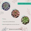 How to care for bashful Succulent, How to make your succulent pink, How to change succulent color, How to make graptoveria bashful Succulent turn pink, Succulent turning pink, How to make succulents change color, How to grow colorful succulents.