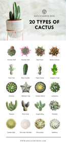 Types of Succulents Printable Art for sale, Printable Cactus Art, Succulents Digital Download, Succulents Home Office Decor, Succulents Gift Ideas, Modern Wall Art Decor, Succulents Printable Poster, printable art cacti download home decor, Types of Sempervivum Succulents for sale