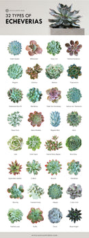 Types of Succulents Printable Art for sale, Printable Cactus Art, Succulents Digital Download, Succulents Home Office Decor, Succulents Gift Ideas, Modern Wall Art Decor, Succulents Printable Poster, printable art cacti download home decor, Types of Haworthia Succulents for sale