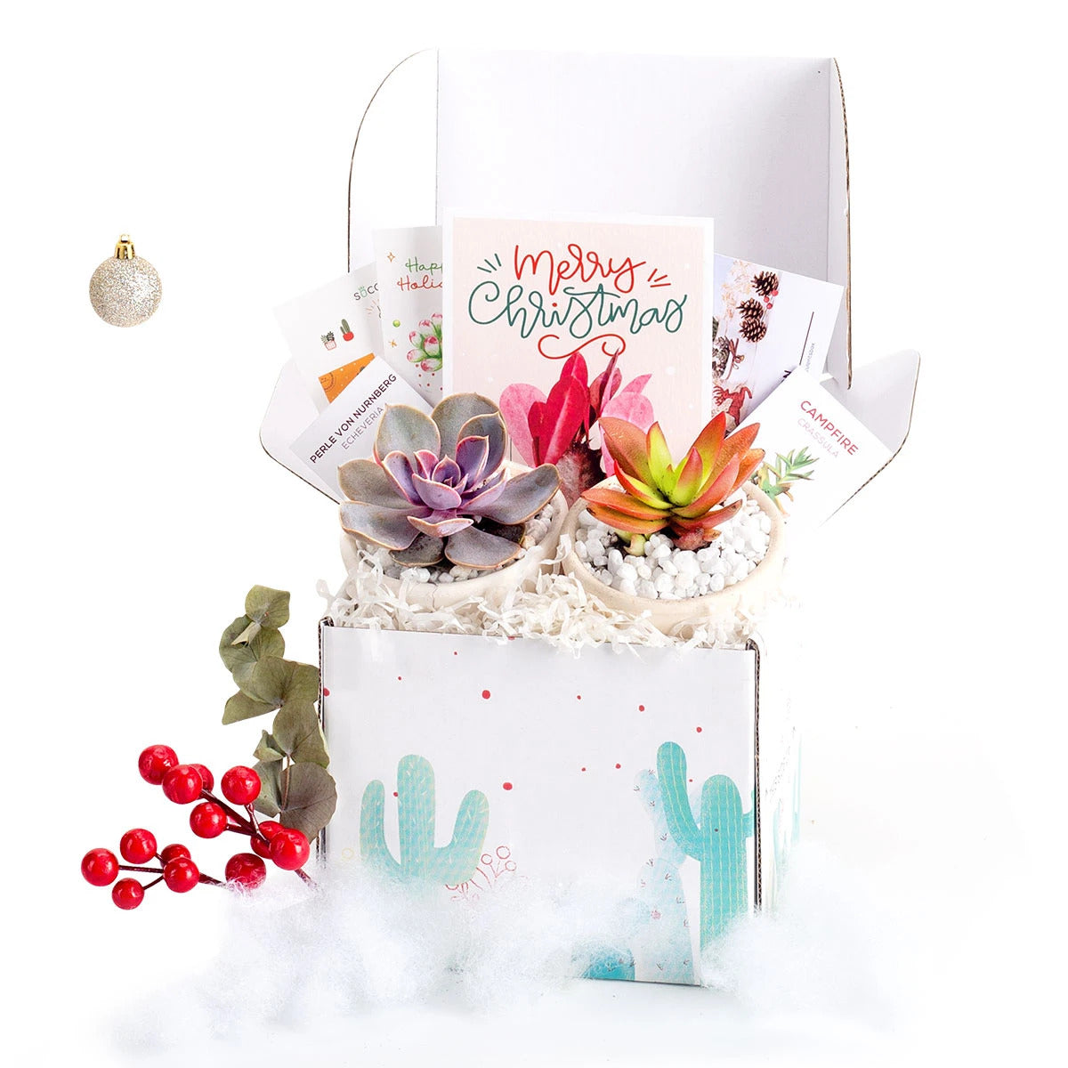 InsightFinder Holiday Gift Box - 2 Succulents