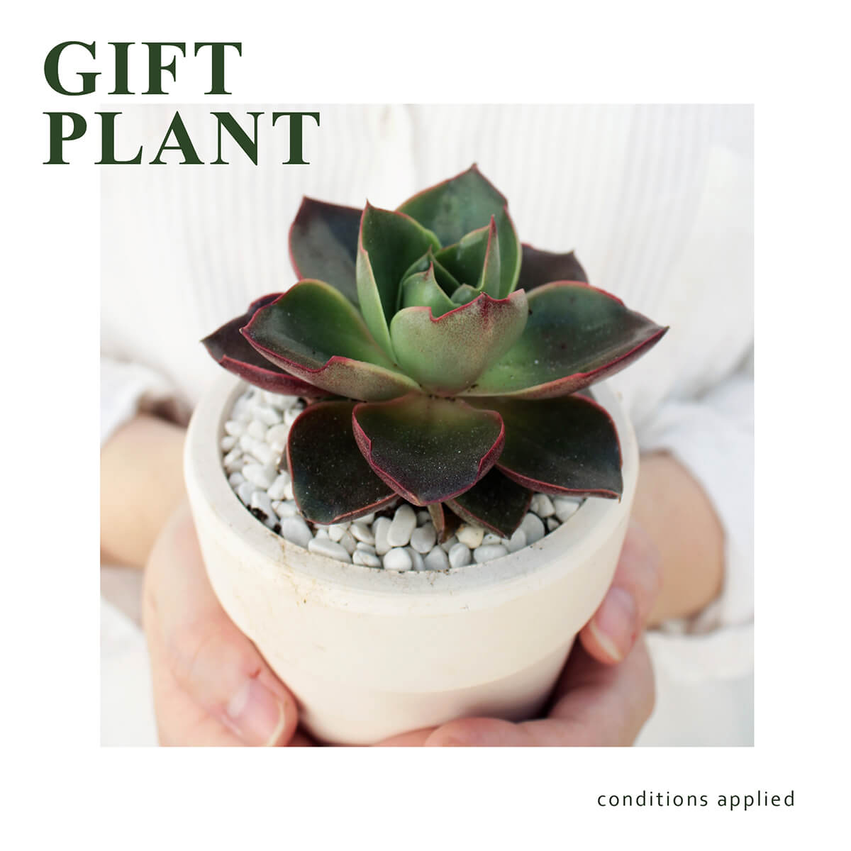gift plant