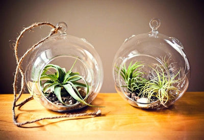 Round Glass Hanging Planters