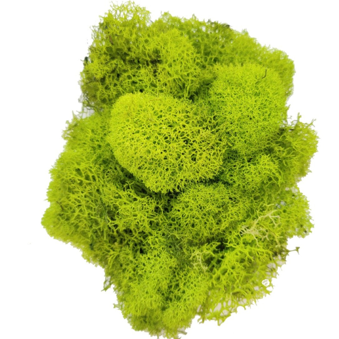 Preserved Reindeer Moss Floral Moss for sale, Garden Accessories, Miniature Garden Landscaping, DIY Terrarium Supplies, Dried Reindeer Lichen, Art Wall Decor, Florist Decor, Easter Table Decor, Terrariums, Wedding decor