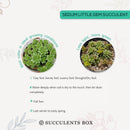 green succulent, monthly succulents, succulent care guide, succulents shop in California, Succulents shop near me, succulent subscription, how to grow succulents, succulents garden, succulent care tips, little gem stonecrop in California, How to grow little gem stonecrop