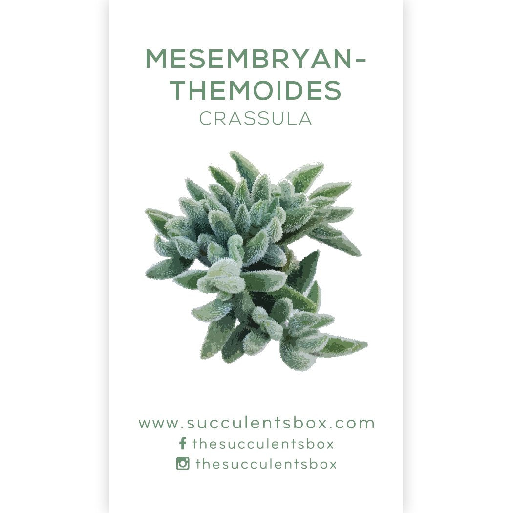 Succulent ID Cards for sale, Airplant ID Cards for sale, Succulent Care Cards, ID Cards for Specific Succulents, Identifying Types of Succulents, Types of Succulent Plants, How to identify Types of succulents, Succulents Gift Ideas, How to care for Types of Succulents