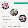 How to care for Moonstones Pachyphytum Succulent, How to make your succulent pink, How to change succulent color, How to make Moonstones Pachyphytum turn pink, Succulent turning pink, How to make succulents change color, How to grow colorful succulents