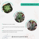 succulent plant, succulent care tips, Rare succulents, Succulents, succulent subscription, succulent care, cactus, succulent care guide, Haworthia zebra in California, How to grow Haworthia zebra