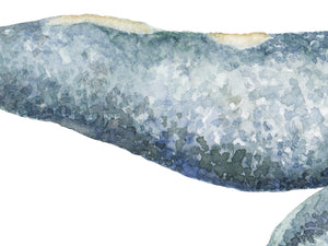 Gray Whale Watercolor Illustration Print