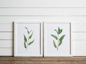 Watercolor Botanicals Set of Two Willow Prints