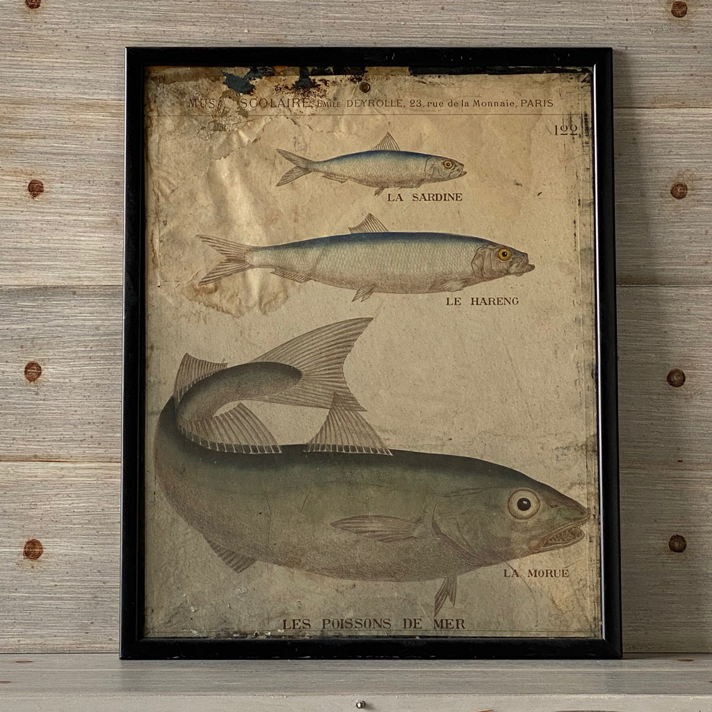 Pair of Maison Deyrolle Antique Fish