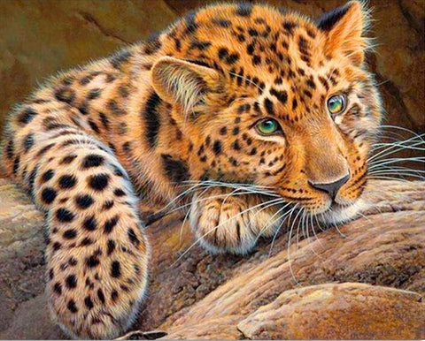 A Leopard Does Not Change His Spots - Easy 5D DIY Diamond Painting Kits - OwlCube Canvas Wall Art - OwlCube - Diamond Painting by Numbers
