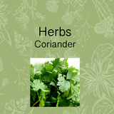 Herb growing kit seeds degradable pots soil pellets. Coriander, easy to grow. Australia