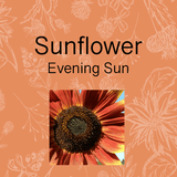 Sunflower growing kit, grow sunbird sunflowers. Just add water. DIY garden gift. Herbs and flowers. Brisbane Australia organic