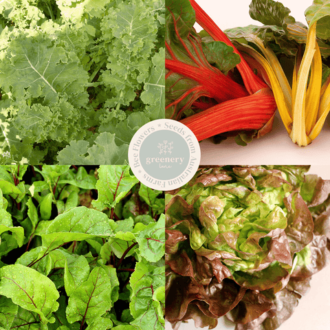 Grow your own salad greens kit. Seed starting eco friendly kale lettuce silverbeet beetroot.