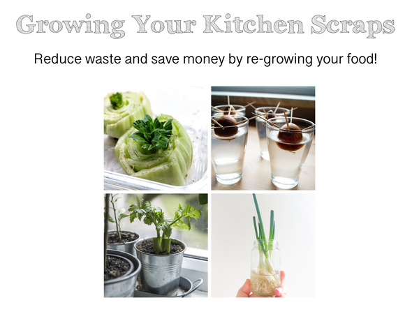 How to grow your kitchen scraps. Zero waste living tips for recycling food and recycle. Gardening tips and advice Australia